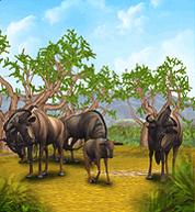 Common Wildebeest.png
