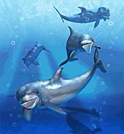 Bottlenose Dolphin.png