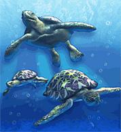 Green Sea Turtle.png