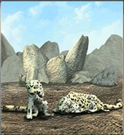 Snow Leopard ZT.jpg