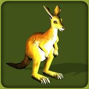 Red Kangaroo.jpg