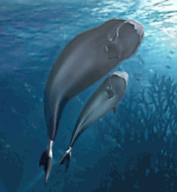 Bowhead Whale.png