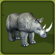 Black Rhinoceros.jpg