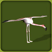 Greater Flamingo.jpg