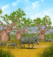 African Warthog.png
