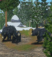 Asian Black Bear.png