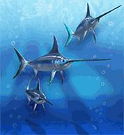 Atlantic Swordfish.png