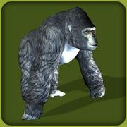 Mountain Gorilla2.jpg