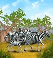 Plains Zebra.png