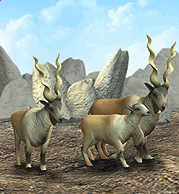 Markhor Plaque.png
