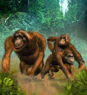 Orangutan.png