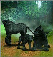 Black Leopard ZT.jpg