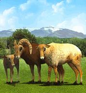 American Bighorn Sheep.png