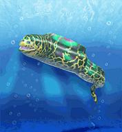 Green Moray Eel.png