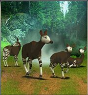 Okapi ZT.jpg