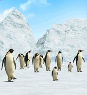 Emperor Penguin.png