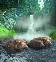 Hippopotamaus.png