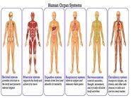 Digestive-system-gr-6-1-638