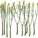 Aglaophyton (Hispa Designs)