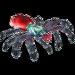 Antilles Pinktoe Tarantula (Terrena Laxamentum)