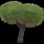 Southern Grass Tree (Aurora Designs)