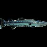 Ambient Great Barracuda (Zerosvalmont)