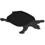 Black Softshell Turtle (Terrena Laxamentum)