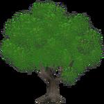 Beech Tree (Kangorilaphant)