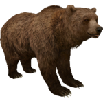 Grizzly Bear (Aurora Designs)