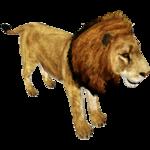 African Lion (Ultamateterex2)/Version 1