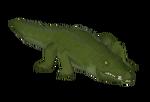 American Alligator (Lupin12)