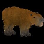 Capybara (Holden)