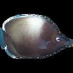 Easter Island Butterflyfish (Dycki1231)