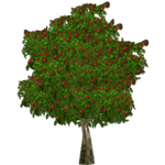 Apple Tree (Worldwide Designers United)