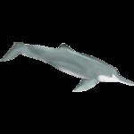 Baiji (Whalebite)