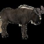 Black Wildebeest (DRAGON-unit911)