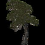 Alpine Pine (Nessich)