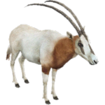 Scimitar-horned Oryx (Aurora Designs)