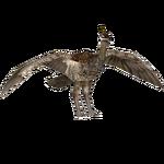 Elegant Crested Tinamou (Acapella & Penguinman)