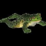 Ambient Giant Bullfrog (Jntg4 & Mjmannella)