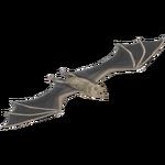 Egyptian Fruit Bat (LilyValley)