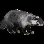 American Badger (Iguano & Maximilian)