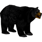 Black Bear (Penguinman & Wolf Loving Bear Lover)
