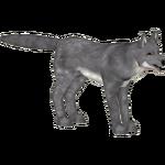 Coyote (penguinbomber14)