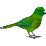 Antipodes Parakeet (Whalebite)/Version 1