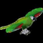 Chestnut Fronted Macaw (Sneke Bite)