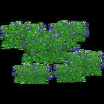 Bilberry (Zeta-Designs)