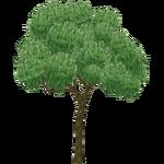 Pepper Tree (The CRG Problem)