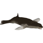 Crabeater Seal (Zoo Tycoon Wildlife Design Team)