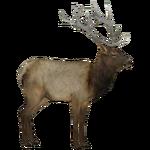 Elk (Ludozoo)